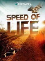 生物快慢间/探索频道:生命的速度