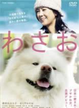 秋田犬蓬夫/松毛犬小威/哇沙噢与我